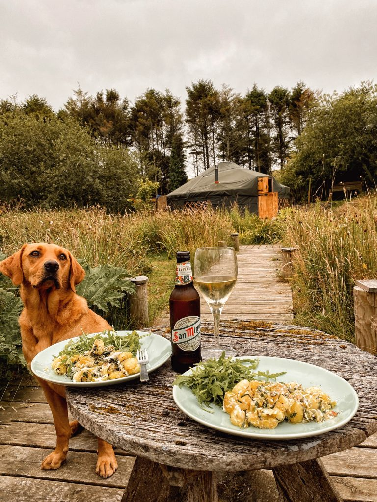 dog-friendly yurt in Cornwall